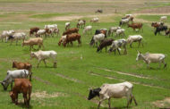 Taraba trains marshals to enforce ban on open grazing