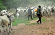 Eleven killed, many displaced as herdsmen attack Taraba villages