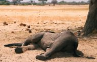 More than 200 elephants die in Zimbabwe's largest national park amid drought