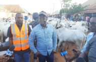 Governor Ortom personally arrests 150 cows, accuses them of contravening state's anti-grazing law