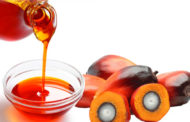 Economic diversification: Nigeria must invest in palm Oil – Stakeholders