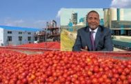 Dangote tomato company resumes production in Kano