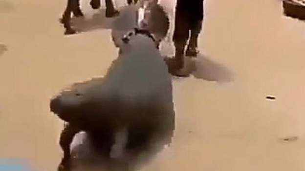 Anger over video of manatee dragged on Nigeria road